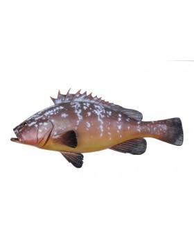Διάφορα Ψάρια